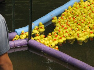"""One by one, duckies crossed the """"finish line."""""""